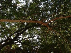sticks liimb